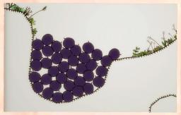 Blueberry Garden Postcard 4